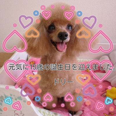 Dolly1_400x400