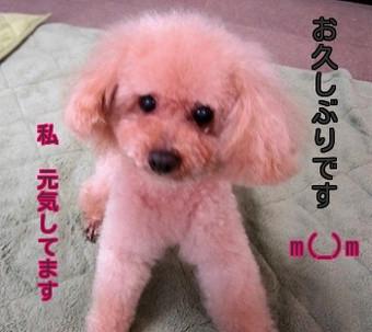 Megu2