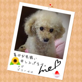 Megu6_4